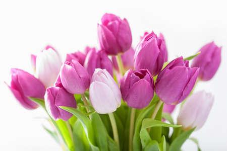 tulip: piękne purpurowe kwiaty tulipanów w tle Zdjęcie Seryjne