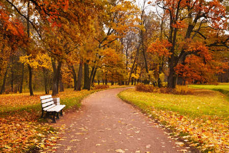 maples: colorful autumn maple trees fallen leaves path bench in park Stock Photo