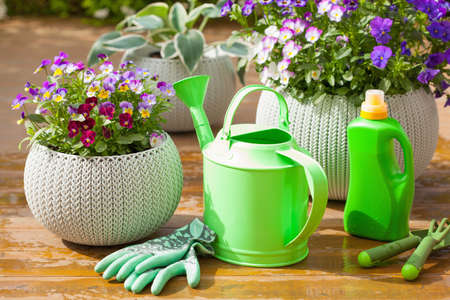 beautiful pansy summer flowers in garden, watering can, tools Stok Fotoğraf - 80151896