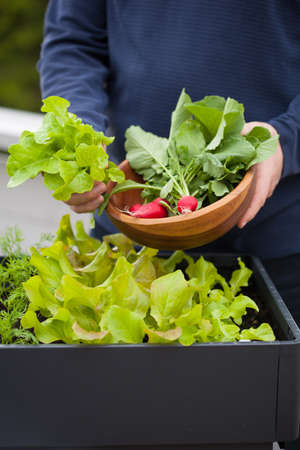 gather: man gardener picking salad and radish from vegetable container garden on balcony