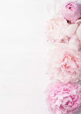 美しいピンクの牡丹の花背景 写真素材