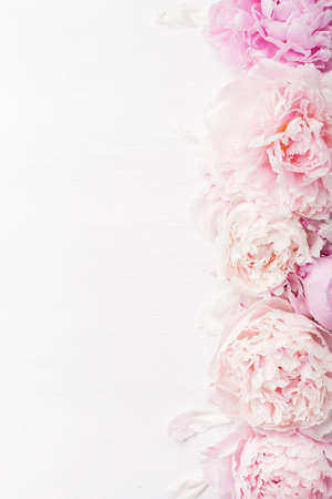 Belle pivoine rose fleur de fond Banque d'images - 85691094
