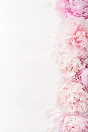 Bello sfondo di peonia rosa Archivio Fotografico - 85691094