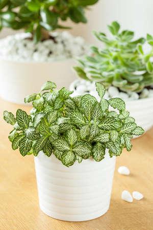 latest winter flowering plants flowering indoor plants white with white flowering house plants - White Flowering House Plants