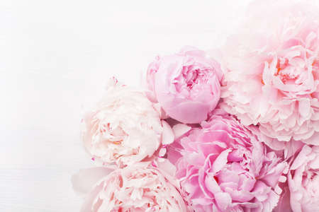 beautiful pink peony flower background Stok Fotoğraf - 94221784