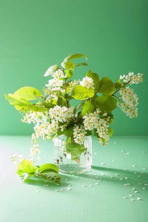 bird-cherry blossom in vase over green background Stock Photo