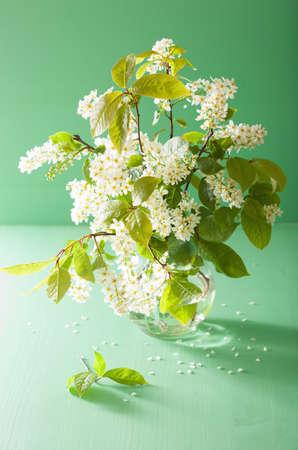 bird-cherry blossom in vase over green background Zdjęcie Seryjne