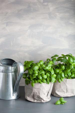 fresh basil herb in paper bag pot  Banco de Imagens
