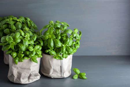 fresh basil herb in paper bag pot