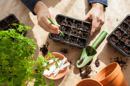 gardening, planting at home. man sowing seeds in germination box Foto de archivo