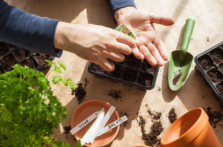 gardening, planting at home. man sowing seeds in germination box Stock fotó