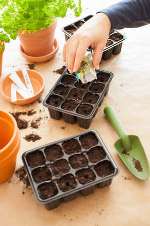 gardening, planting at home. man sowing seeds in germination box Stock Photo