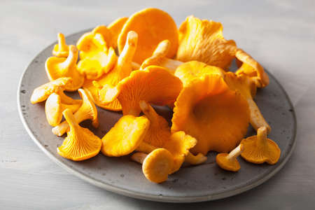raw fresh chanterelle mushrooms on gray background Stock Photo