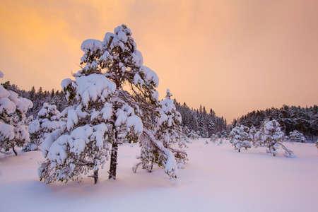 beautiful winter landscape snow tree