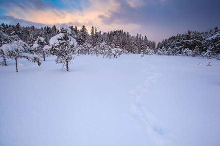 beautiful winter landscape snow tree 스톡 콘텐츠 - 111742423