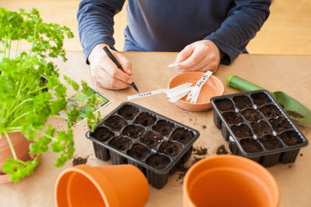 gardening, planting at home. man sowing seeds in germination box 스톡 콘텐츠