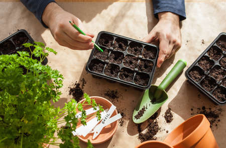 gardening, planting at home. man sowing seeds in germination box 写真素材