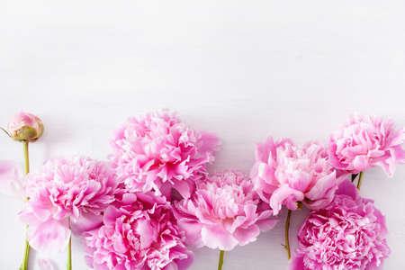Beautiful pink peony flower Zdjęcie Seryjne