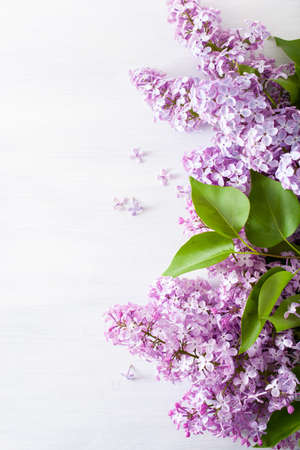 Beautiful lilac flowers on white