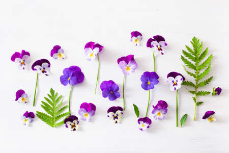 beautiful pansy summer flowers flatlay on white Banco de Imagens