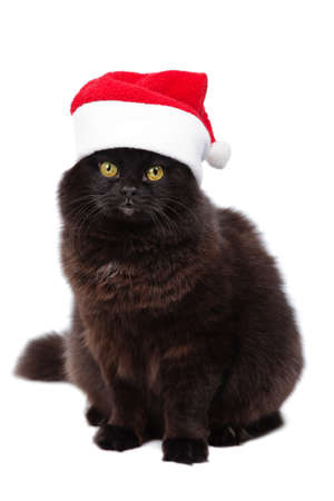 christmas bkack cat in red santa hat isolated