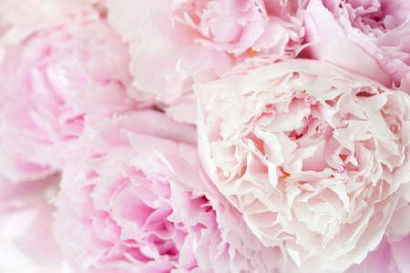 beautiful pink peony flower background