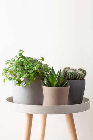 green houseplants cactus succulent gasteria duval, parodia warasii