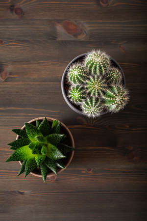 green houseplants flat lay cactus succulent gasteria duval, parodia warasii Stok Fotoğraf