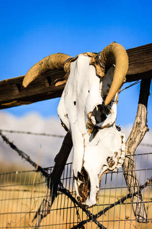 Cow skull ornament hanging on ranch gate
