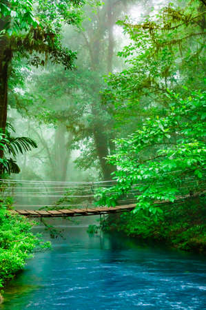 Wooden foot bridge in the rainforest