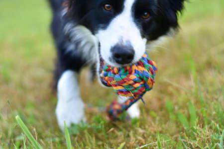dog aport ball