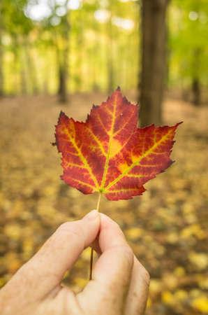 hudson: Fall colors, Hudson River Valley Stock Photo