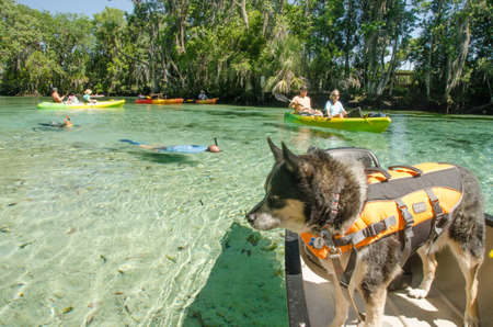 three sisters: Dog in canoe on Three Sisters Springs, Crystal river Florida