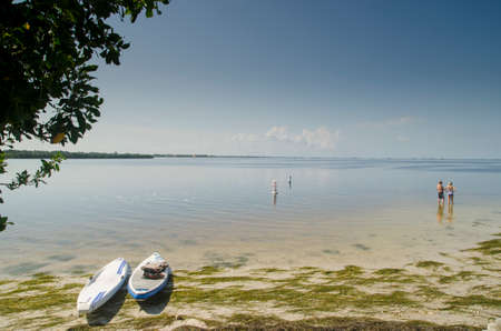 paddleboard: Paddle Boards at Sunset Beach Park, Tarpon Springs Florida