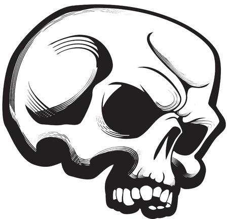 Skull Stock Vector - 6246953