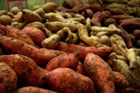 ジャガイモのすべての種類 写真素材 - 557856