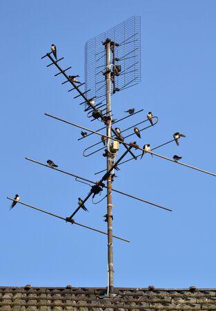 TV antenna with farmer swallows.