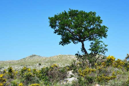 Tree in the hillocks.