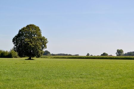 Solitary tree in a meadow in Zelhem, The Netherlands  Stock Photo
