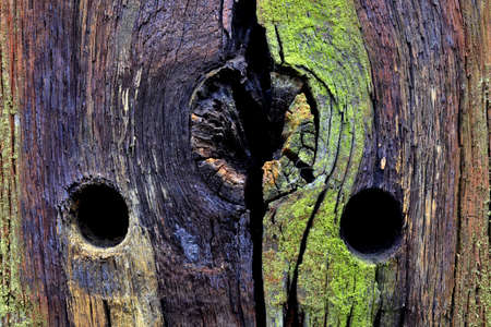Detail of the colours and wood structure of a pole in The Posbank nature reserve, Netherlands  Stock Photo - 16672084
