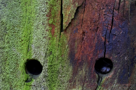 posbank: Detail of the colours and wood structure of a pole in The Posbank nature reserve, Netherlands