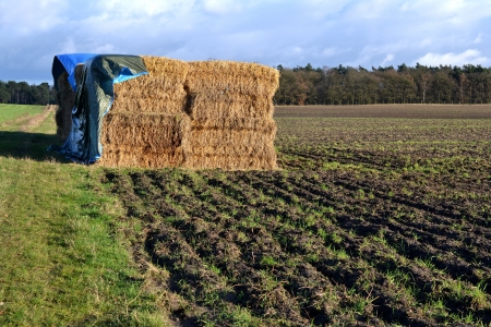 A tarpaulin protects the straw on a field pasture in Hoenderloo, The Netherlands  Stock Photo