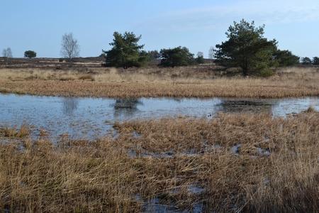 heathland: Creek in a heathland field in Elspeet, The Netherlands in the winter  Stock Photo