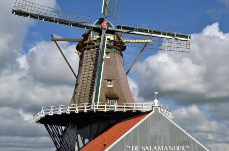 leidschendam: Mill The Salamander in Leidschendam, The Netherlands  Editorial
