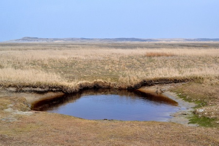 Nature reserve De Slufter on Texel, Netherlands  photo
