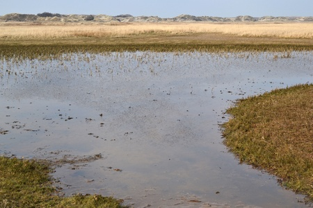 salt marsh: Nature reserve De Slufter on Texel, Netherlands  Stock Photo