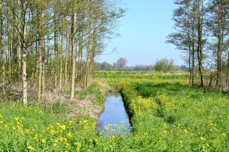 leidschendam: Landscape with a ditch in the Vlielanden in Leidschendam