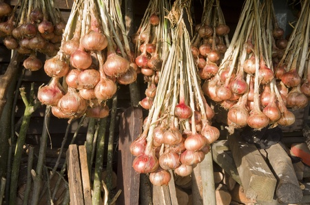 Onions hanging to dry in the organic vegetable garden Groentenhof in Leidschendam, Netherlands  photo