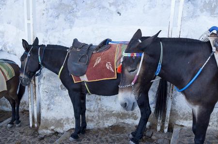 Donkey in Thira on Santorini island in Greece Stock Photo - 24440290