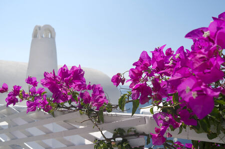 Bouganville in Oia on the island of Santorini in Greece  photo